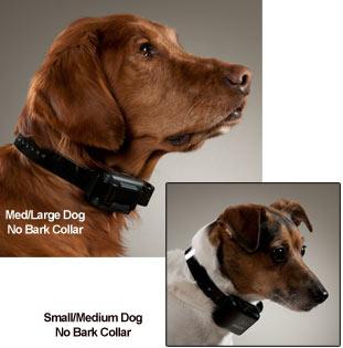 Using Shock Collar At Dog Park